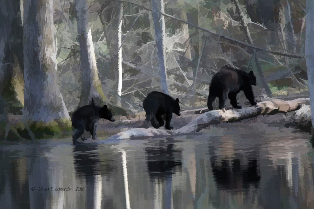 3 bears watercolor