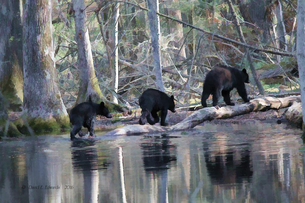 3 bears oil