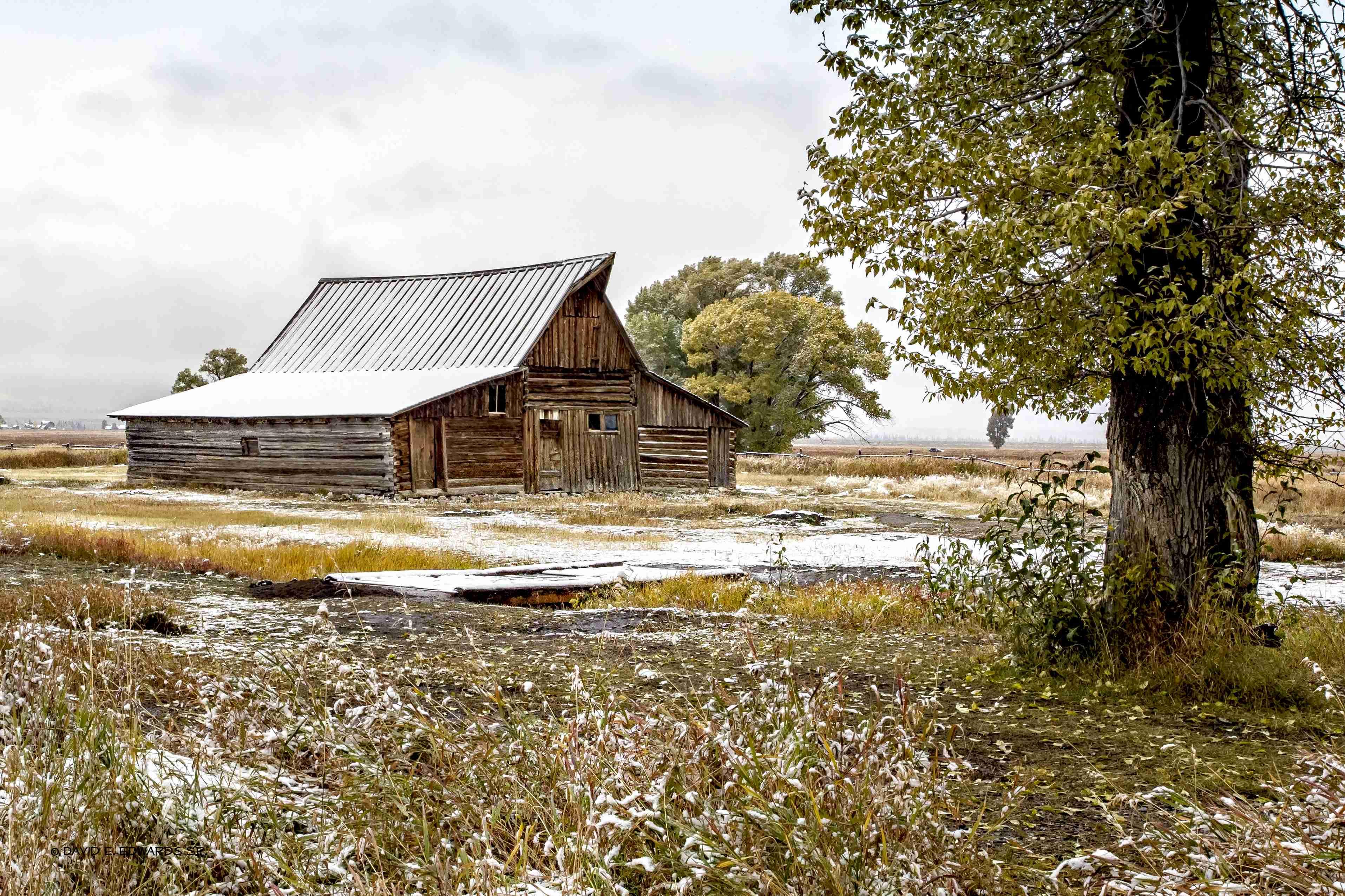 TA Moulton barn and tree a 36x24 20