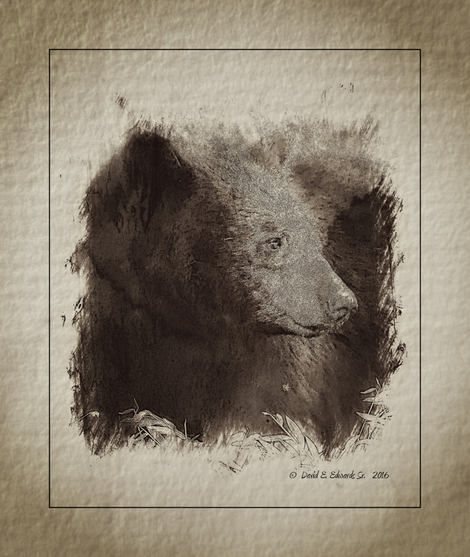 Antique Bear Pic