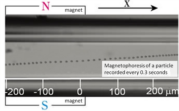 magnetic motility image.png