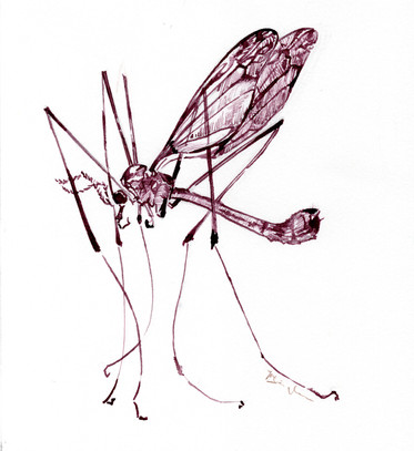 Mosquito Ink Drawing