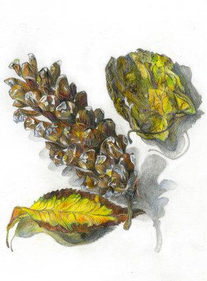 Still Life of Pine Cone and Leaves