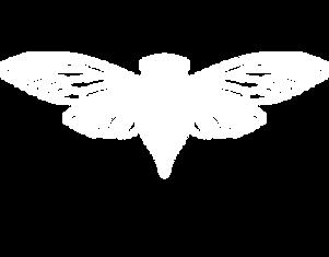 Cicada no BG White.png