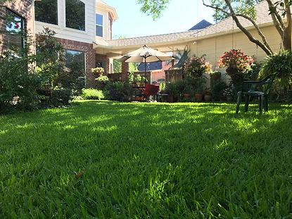 Organic Lawn Care in Houston Tx