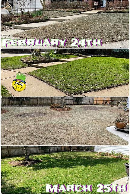 Lawn Restoration in Progress