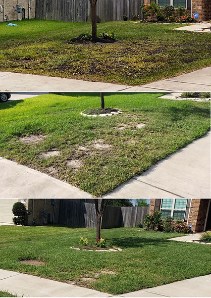Lawn Restoration in Pearland Tx,  Heavy Chemical Damage