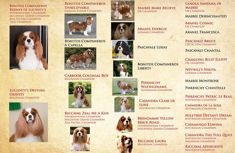Juno's pups ped new.jpg