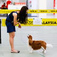 20160304-20160304-6 MKA Dogshow d1_1009(
