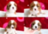 InShot_20200422_204030707_edited.jpg