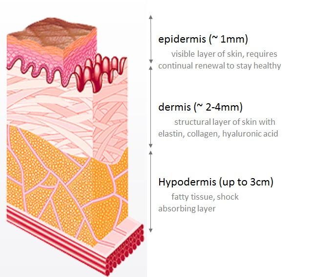 Skin layers relative to skincare