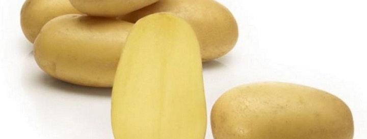 Картопля Королева Анна