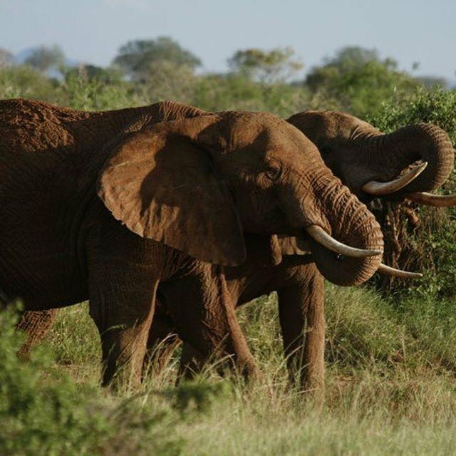 A trip to Kenya