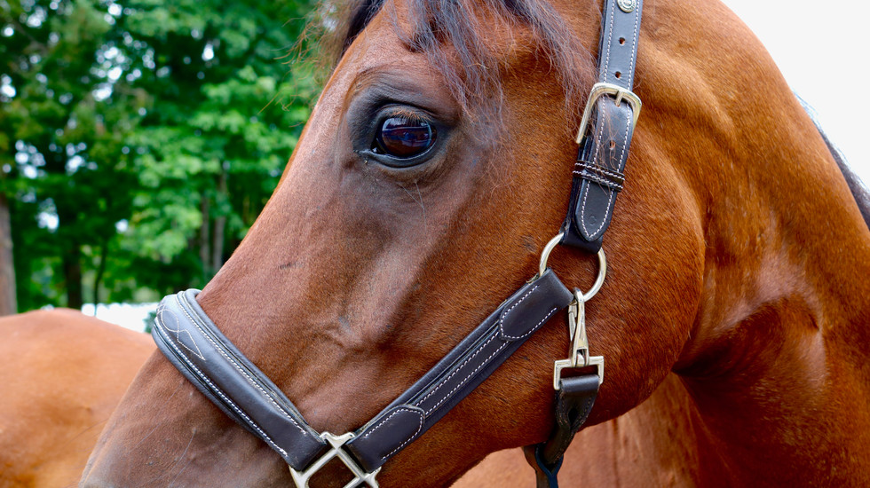 Collective Mind Technologies - Horse Photography