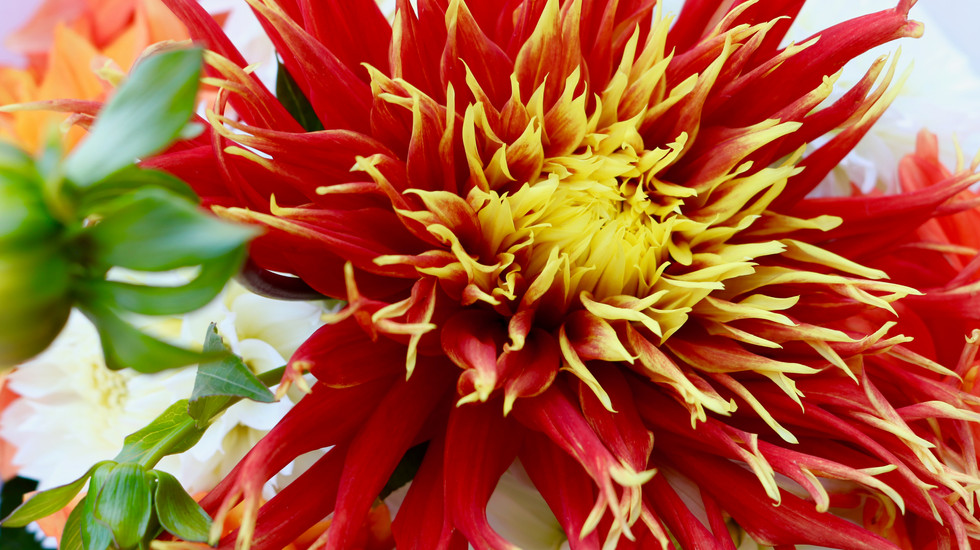 Collective Mind Technologies - Flower Photography