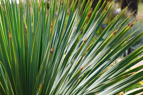Collective Mind Technologies - Botanic Garden Photography