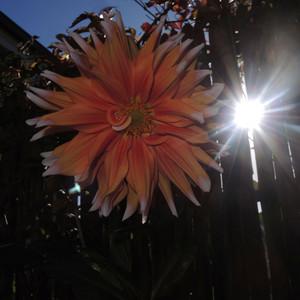 flower stills