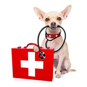 dog health b.jpg