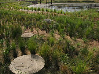 wetlands_sydneypark.jpg
