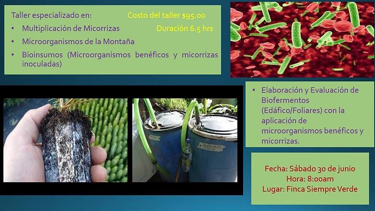 Microorganismos benéficos en la agricultura ecológica
