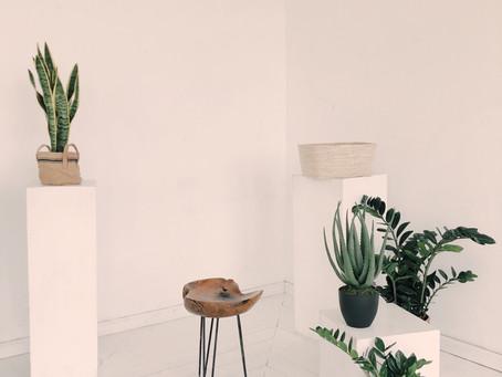 3 Indoor Plants that Improve Your Health