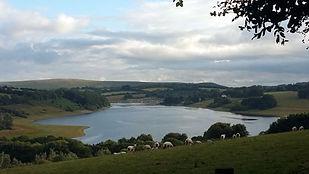 Somerset-bottom-2.jpg
