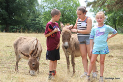 Campers with donkeys