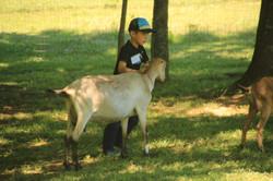 Camper goat showing