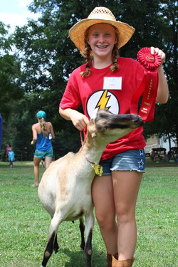 Goat show time!
