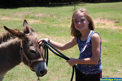 Camper with donkey