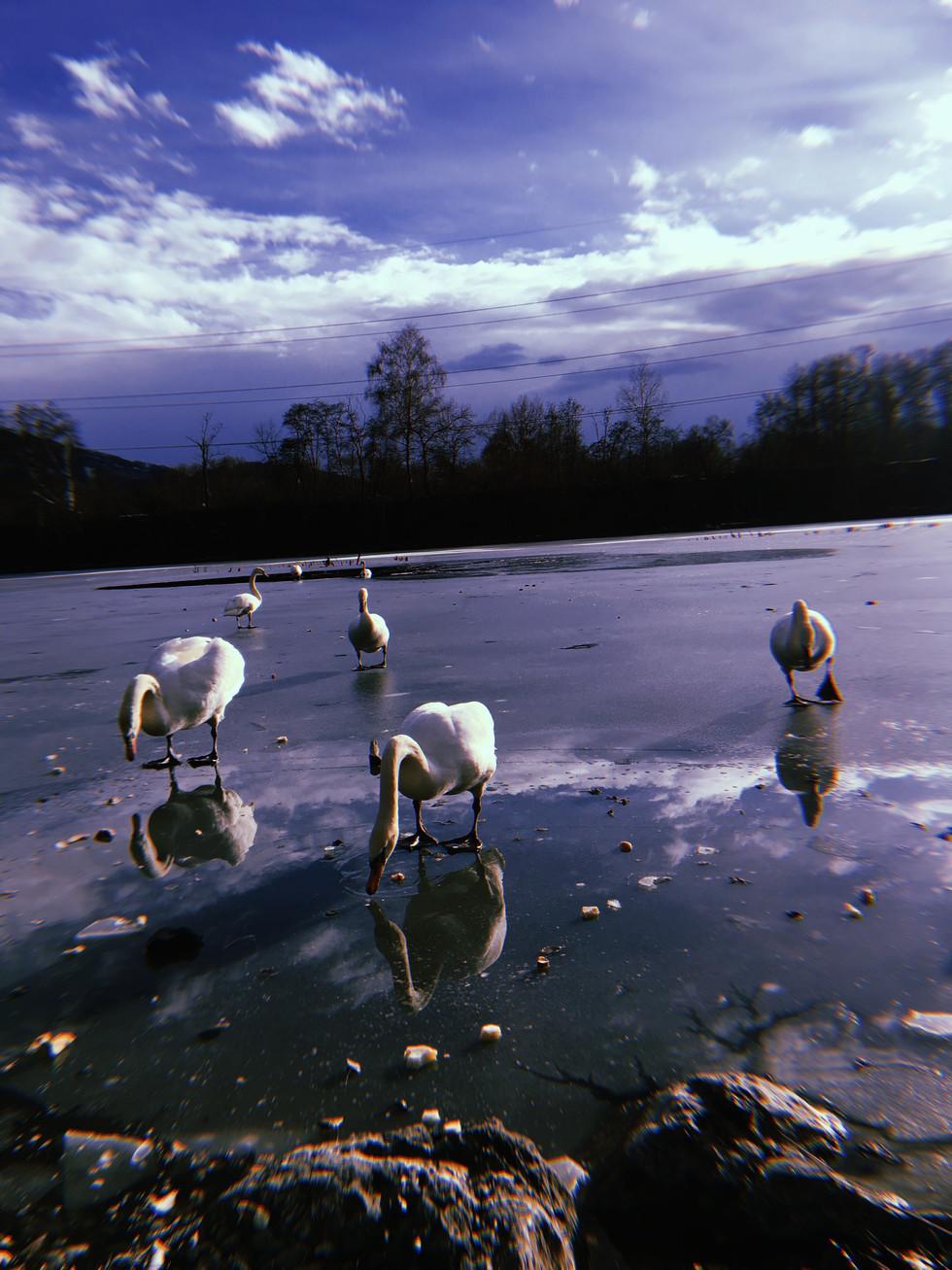 Alter Rhein im Winter