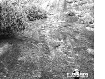 """Download: M.TAKARA """"mundotigre ao vivo no rio"""" [bq003]"""