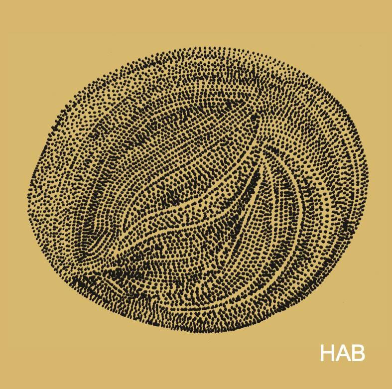 hab-vinil.jpg