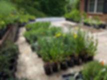 Plant Sale 3-2.jpg