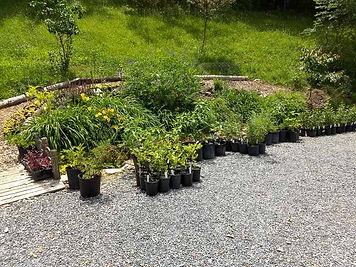 Plant Sale 4-2.jpg