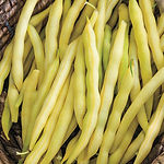 phaseolus vulgaris, Bean cherokee wax bu