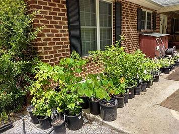 Plant Sale 1-2.jpg