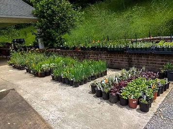 Plant Sale 2-2.jpg