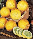 Cucunis sativas, Cucumber Lemon.jpg