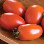 Solanum lycopersicum, tomato amish paste