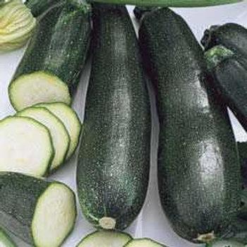 Cucurbita pepo 'Jackpot Hybrid', Jackpot Zucchini Squash (Summer) (4 pack)