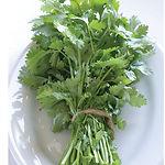 Coriandrum satiyum, Cilantro.jpg
