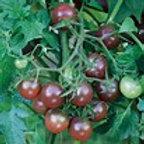Lycopersicon lycopersicum 'Black Cherry', Black Cherry Tomato