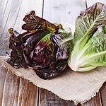 Lactua sativa, Lettuce red romaine.jpg