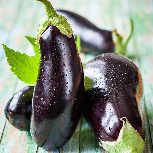 Solanum melongena var. esculentum 'Black Beauty', Black Beauty Heirloom Eggplant