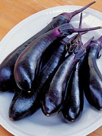 Solanum melongena esculentum 'Millionaire', Millionaire Hybrid Eggplant