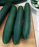 Cucunis sativas, Cucumber marketmore.jpg
