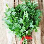 Petroselinum crispum, Parsley italian.jp