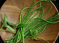 Vigna unguniculata (Liana, Asparagus Bea