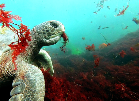 """Lessons of the Sea Turtle: Maximizing Your Chances of a """"Once in a Lifetime"""" Encounter"""